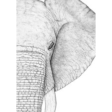Ethan the Elephant Right Printed Wall Art