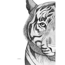 Timothy the Tiger Printed Wall Art