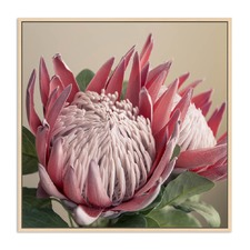 Protea Portrait Framed Canvas Wall Art