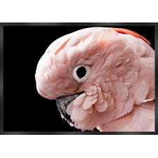 Pink Cockatoo Framed Canvas Wall Art