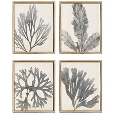 4 Piece Coral Radiograph Framed Print Wall Art Set