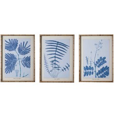 3 Piece Mimosa & Dandelion Framed Print Wall Art Set
