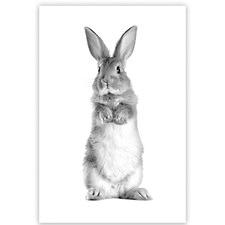 Snowball the Rabbit Canvas Wall Art