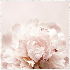 Pretty as a Peony Picture Framed Canvas Wall Art