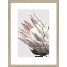 Protea Cluster B Framed Printed Wall Art
