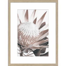 Protea Cluster C Framed Printed Wall Art