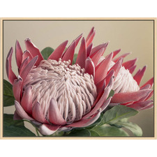 Protea Portrait Natural Framed Canvas Wall Art