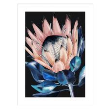 Vibrant Protea Bloom Framed Printed Wall Art