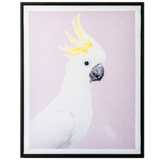 Where's Polly Cockatoo Framed Canvas Wall Art