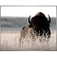Bovine In Wait Framed Canvas Wall Art
