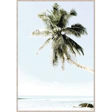 Palm Days Framed Canvas Wall Art