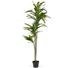 165cm Faux Potted Lemon Dracaena