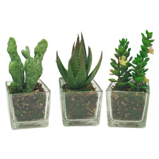 3 Piece Faux Succulents in Glass Pots Set