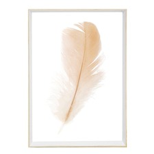 Freefall Feather Framed Print