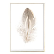 Plummet Feather Framed Print