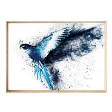 Rio Wings Framed Print