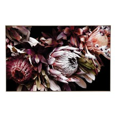 Wine Protea Framed Print