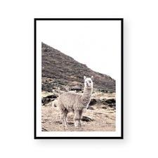 Mountain Llama Framed Paper Print
