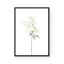 Wattle Stem Framed Paper Print