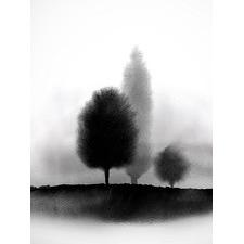 Treescape Unframed Canvas Wall Art