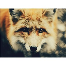 Sir Fox Unframed Canvas Wall Art