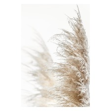 Pampas Grass Printed Wall Art