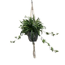 90cm Faux Spider Plant in Hanging Pot