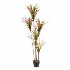 160cm Potted Faux Dracaena Plant