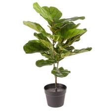 75cm Potted Faux Fiddle Leaf Plant
