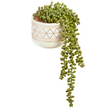 40cm Potted Faux String of Pearls Plant