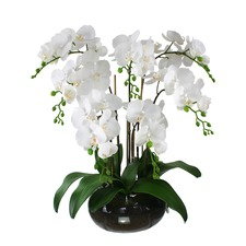 Faux Phal Orchid in Fish Bowl Vase