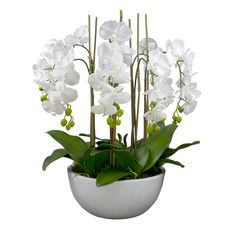 Faux Phal Orchid with Ceramic Pot