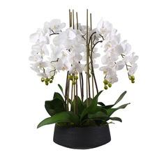 73cm Faux Phal Orchid with Black Pot