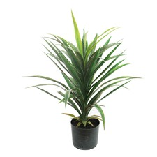 Faux Yucca Plant with Pot