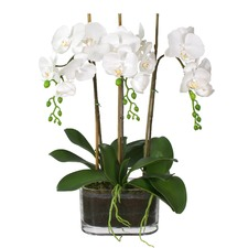 Faux Phal Orchid in Oblong Glass Vase