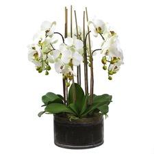 6 Stem Faux Orchids Set with Glass Pot