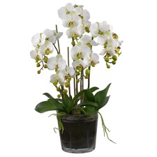 6 Stem Faux Orchids Set with Tapered Pot