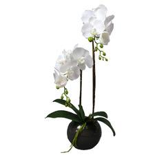 60cm Faux Phalaenopsis in Glass Vase