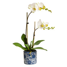55cm Faux Apple Green Phalaenopsis Orchids in Dynasty Pot