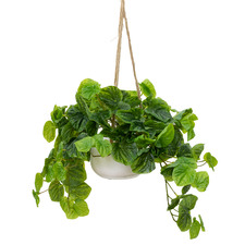 72cm Potted Faux Hanging Green Peperomia Caperata Plant