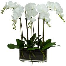 60cm 3 Stem Faux Phal Orchids Set in Oblong Glass Vase
