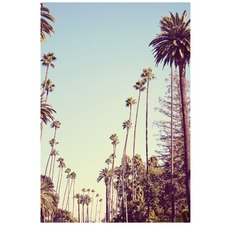 Beverly Hills Palms Printed Wall Art