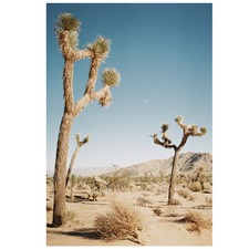 Joshua Tree & The Moon Printed Wall Art