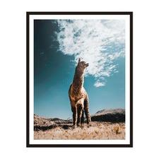 Llama Framed Wall Art