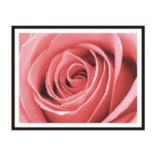 Luscious Rose Framed Wall Art by ArteFocus