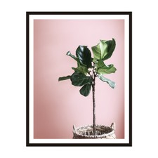 Fiddle Fig Framed Wall Art