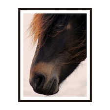 Pony Framed Wall Art
