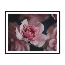Rose Framed Wall Art by ArteFocus