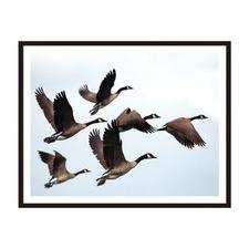 Flying Home Framed Wall Art