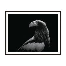 Eagle Eye Framed Wall Art